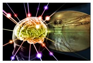 brain beauty perception