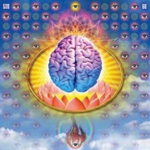 lsd brain
